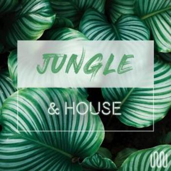 JUNGLE & HOUSE