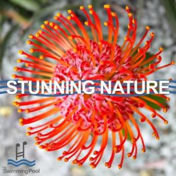 Stunning Nature